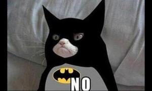 Grumpy cat weighs in.