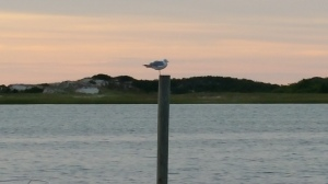 Even the seagulls in Cape Cod like to take in the sunset.